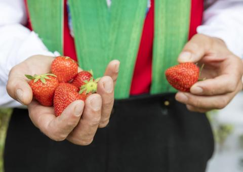 South Tyrolean Strawberry Festival