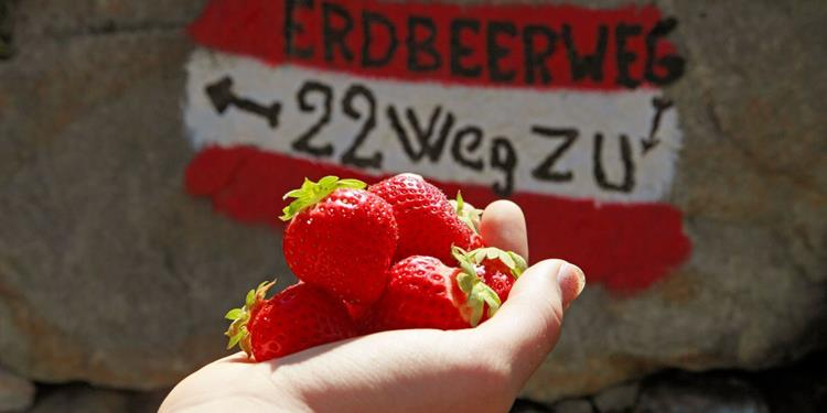 South Tyrol Strawberry Trail