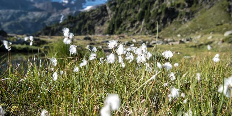Ortler High Mountain Trail Stage 6: From Sant'Antonio to Lake Cancano