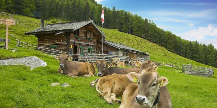 From the Latschiniger Alm pasture to the Freiberger Alm pasture